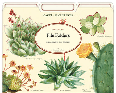 Succulents File Folder set by Cavallini & Co.- beautiful, bright cacti and succulent images!