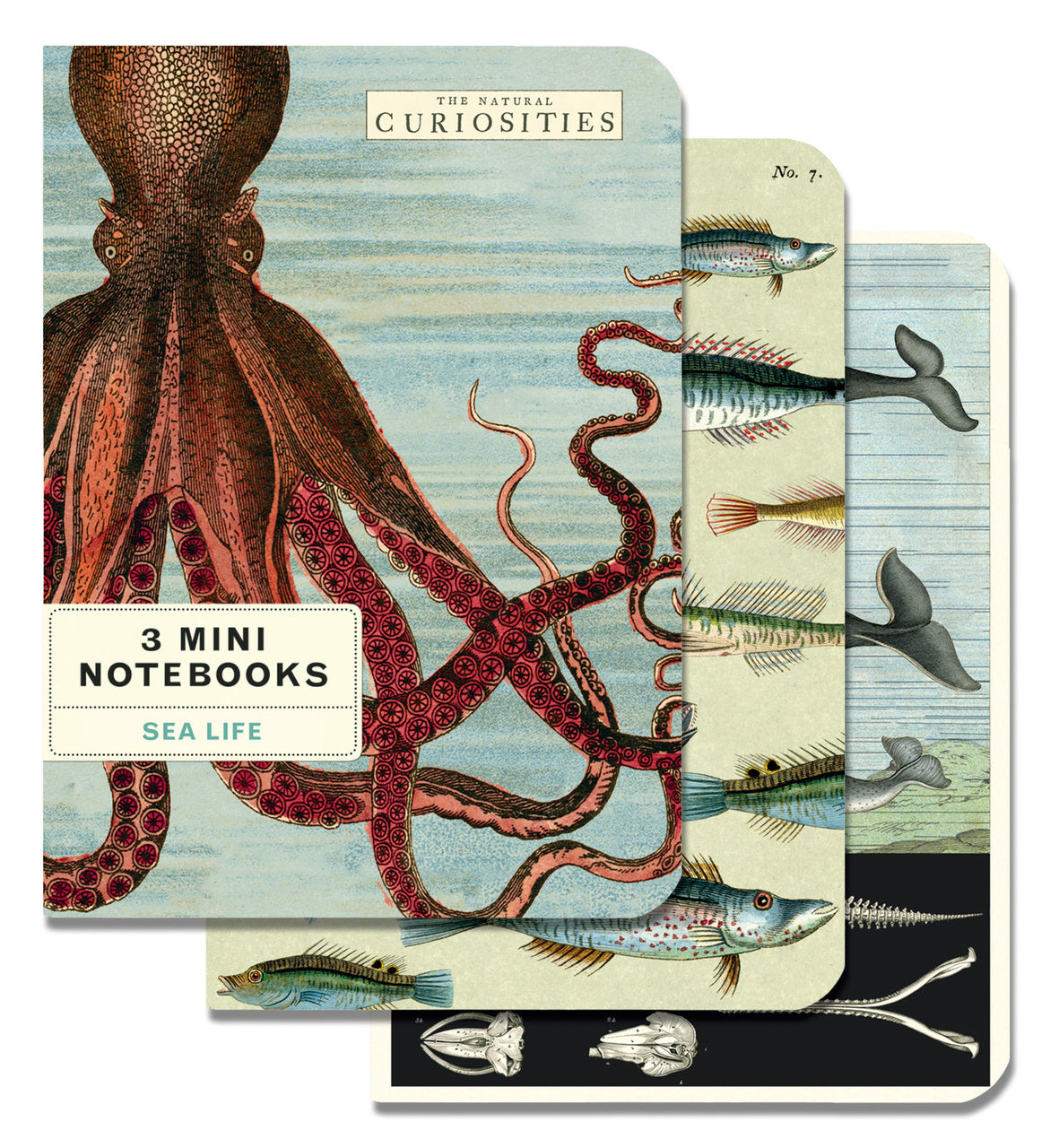 Cavallini & Co. Sea Life Mini Notebook Set features three notebooks with vintage scientific images of undersea creatures.