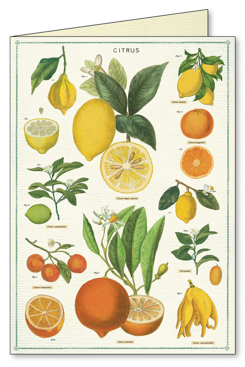 Citrus notecard features bright and beautiful vintage images of citrus fruits, leaves and stems.