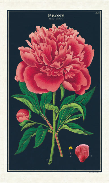 A new design for 2020, the Peony Cotton Tea Towel features a beautiful vintage image of a peony. The rich color of the flower and the dark background will add character to any space.