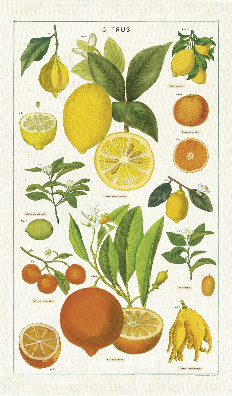 Lemons, limes, oranges, and tangerines are among the citrus fruits featured on Cavallini's Citrus Tea Towel. You don't have to be a  gardener to appreciate the beauty in these vintage botanical images.