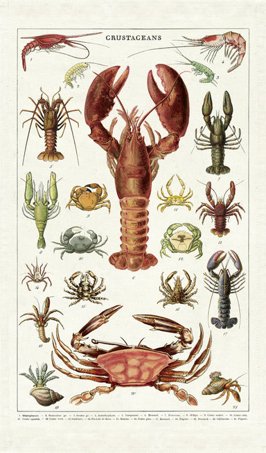 Bring sea life to your kitchen with Cavallini's Crustaceans Tea Towel. Whether or not lobster or crab are your favorite dishes, Crustaceans Tea Towel will be your favorite!