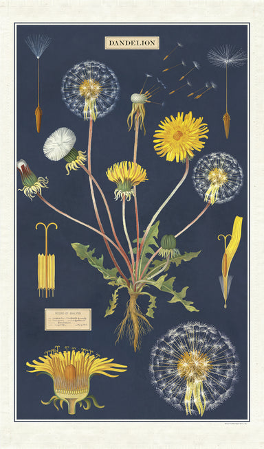 Cavallini & Co. Dandelion Cotton Tea Towel features reproductions of vintage scientific images of the dandelion in various stages of growth and bloom.