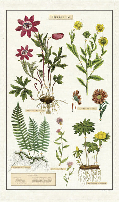Cavallini & Co. Herbarium Cotton Tea Towel
