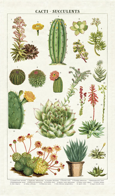One of our favorite Cavallini tea towels so far! Succulents features beautiful vintage cacti and succulent images.