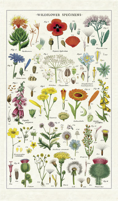 Cavallini & Co. Herbarium Cotton Tea Towel features reproductions of vintage scientific images, complete with scientific names. This tea towel is densely packed with colorful wildflower images on a natural background.