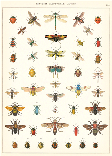 Cavallini Natural History Insects Decorative Wrap is perfect to hang on the wall or use to wrap a gift.
