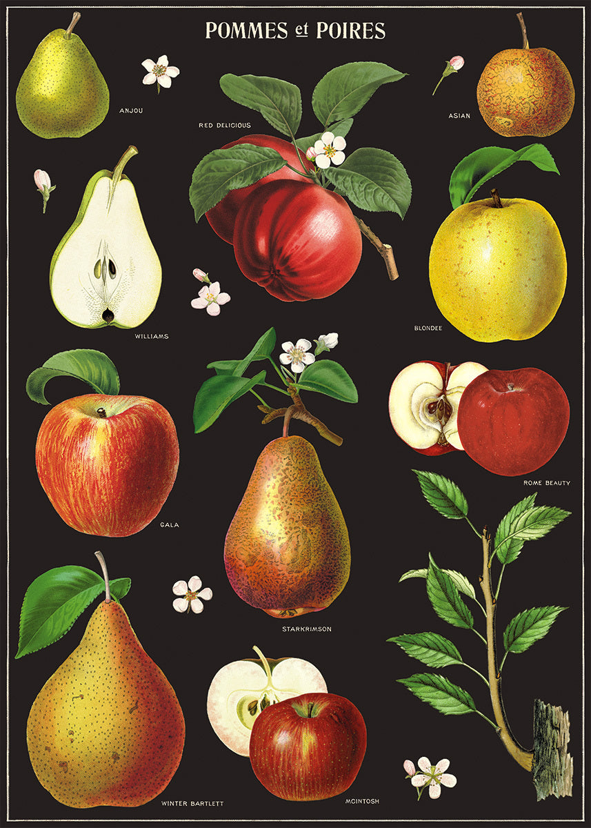 "Beautifully painted botanical images of ""pommes et poires"" adorn this wrap with its rich, dark background."