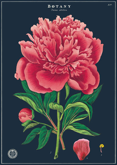 New for 2020- Botany study decorative wrap.  This beautiful vintage image of a peony just begs to be framed and hung on a wall!