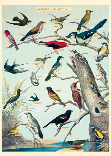 Cavallini's latest wrap for bird lovers. This wrap features reproductions of of Audubon's drawings in chart form.