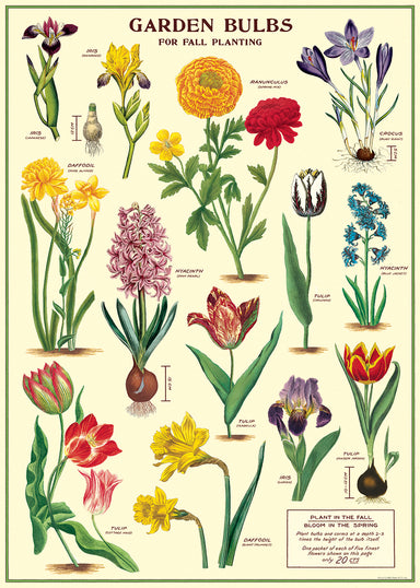 Cavallini & CO. Garden Bulbs Decorative Paper