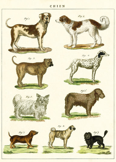 Cavallini & Co. Dog Chart features reproductions of vintage dog images printed on fine, high quality laid paper.