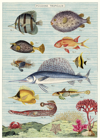 Cavallini's Tropical Fish Decorative Wrap is a colorful and detailed series of vintage fish images. This wrap just begs to be framed and hung in a bathroom!