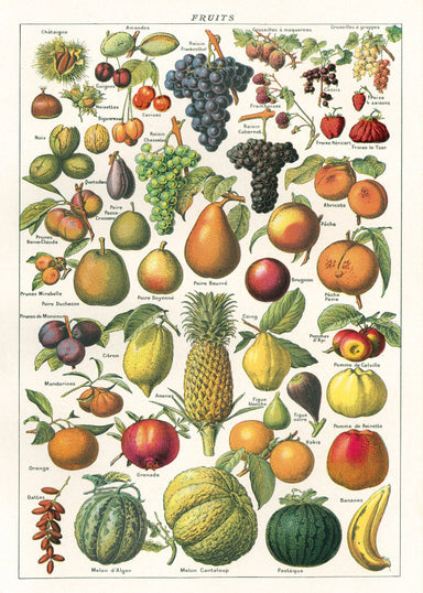 Cavallini & Co. Fruit Chart is the perfect wrap for any gardener, or anyone who is a fan of vintage botanical images.