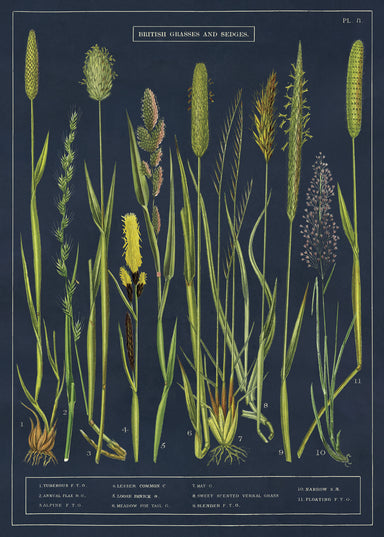 """British Grasses and Sedges"" is the title of this wrap. Each image is numbered and has its common name at the chart bottom."