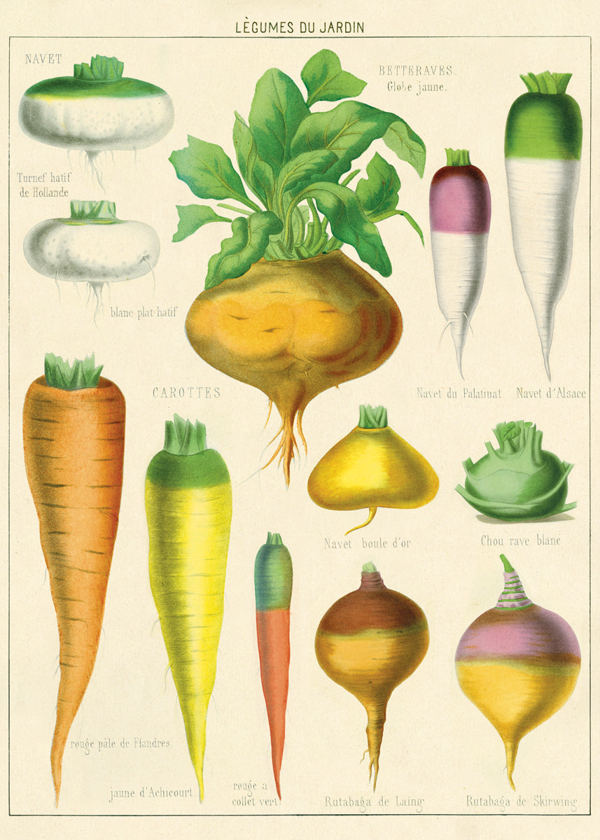 If you are a gardener, or just of fan of vintage botanical images, Cavallini's Legume Du Jardin is for you. Colorful vintage images of root vegetables adorn this paper.