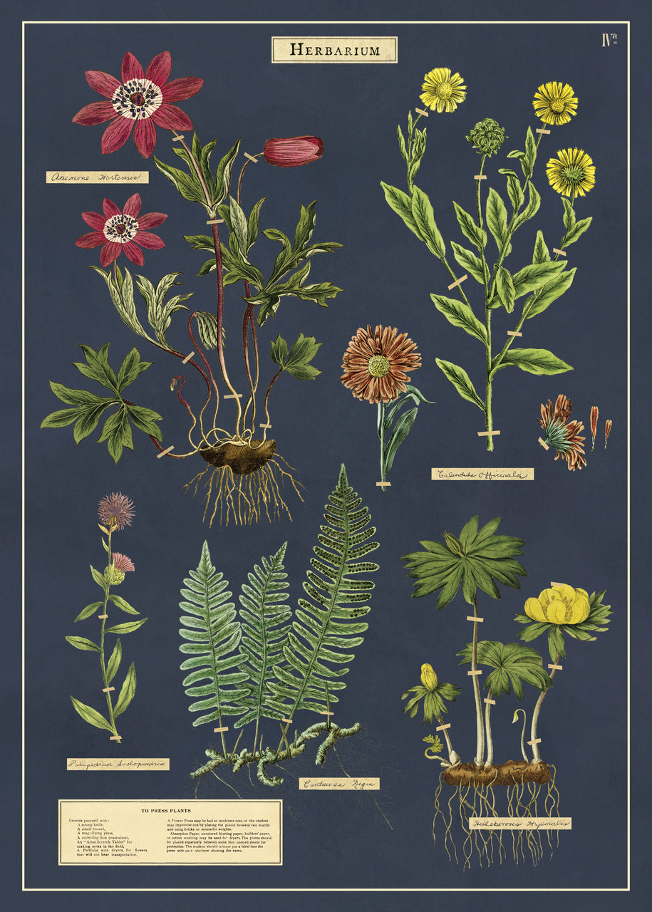 "Herbarium is reminiscent of a vintage botanical chart. This wrap has images of specimens that have been ""collected"" and ""taped in place""."