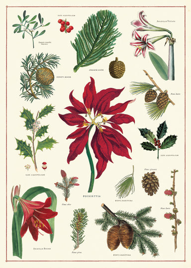 Cavallini & Co. Christmas Botanica Decorative Wrap