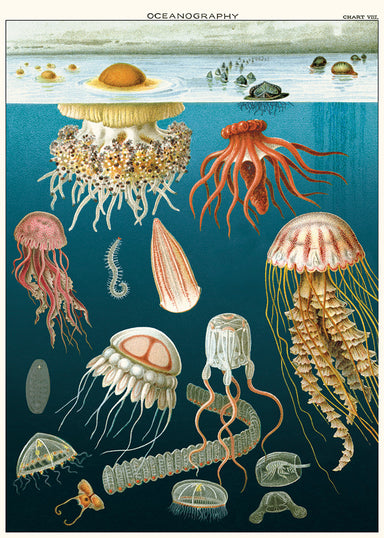 New for 2020- beautifully detailed scientific images of jellyfish that will compliment any room as a wall hanging.
