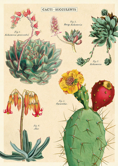 Succulents No. 2 features beautiful vintage cacti and succulent images- it can be used as gift wrap for a cactus loving friend, embellishment to your next project, or a wall hanging decoration.