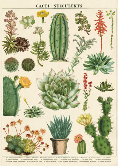 Cavallini & Co. Succulents Decorative Wrap features beautiful vintage cacti and succulent images- it can be used as gift wrap for a cactus loving friend or to brighten any room.