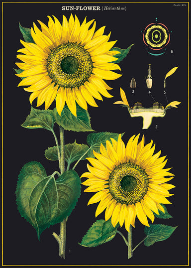 One of the most beautiful scientific poster yet! Sunflowers, with its rich, dark background will add character to any room.