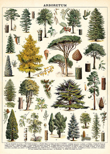 Vintage tree images adorn the new Cavallini Arboretum wrap. Each image is identified by its scientific name at the bottom of the chart.