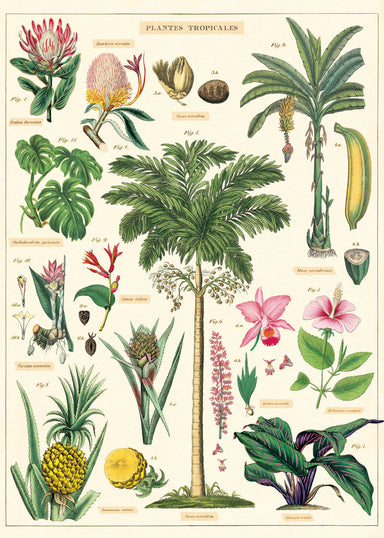 Beautiful vintage images of tropical plants adorn the new Cavallini Tropical Plants wrap- the perfect way to transport yourself to a warmer climate!