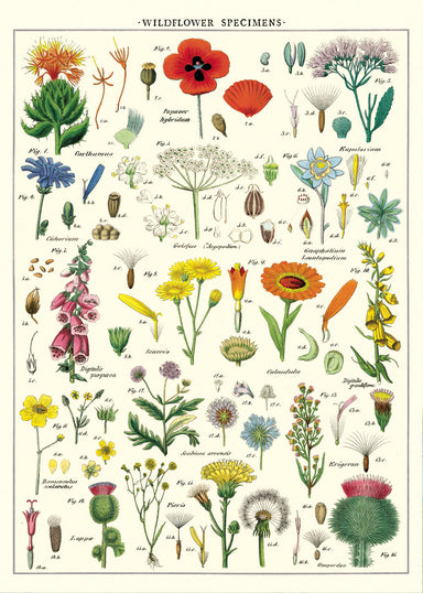 Cavallini WIldflowers Decorative Wrap is densely packed with wildflower images, each having its scientific name alongside.