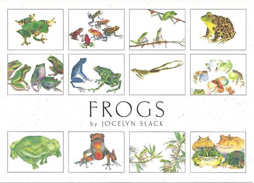 Crane Creek Graphics Frogs Notecard Folio- set of 12 cards and envelopes