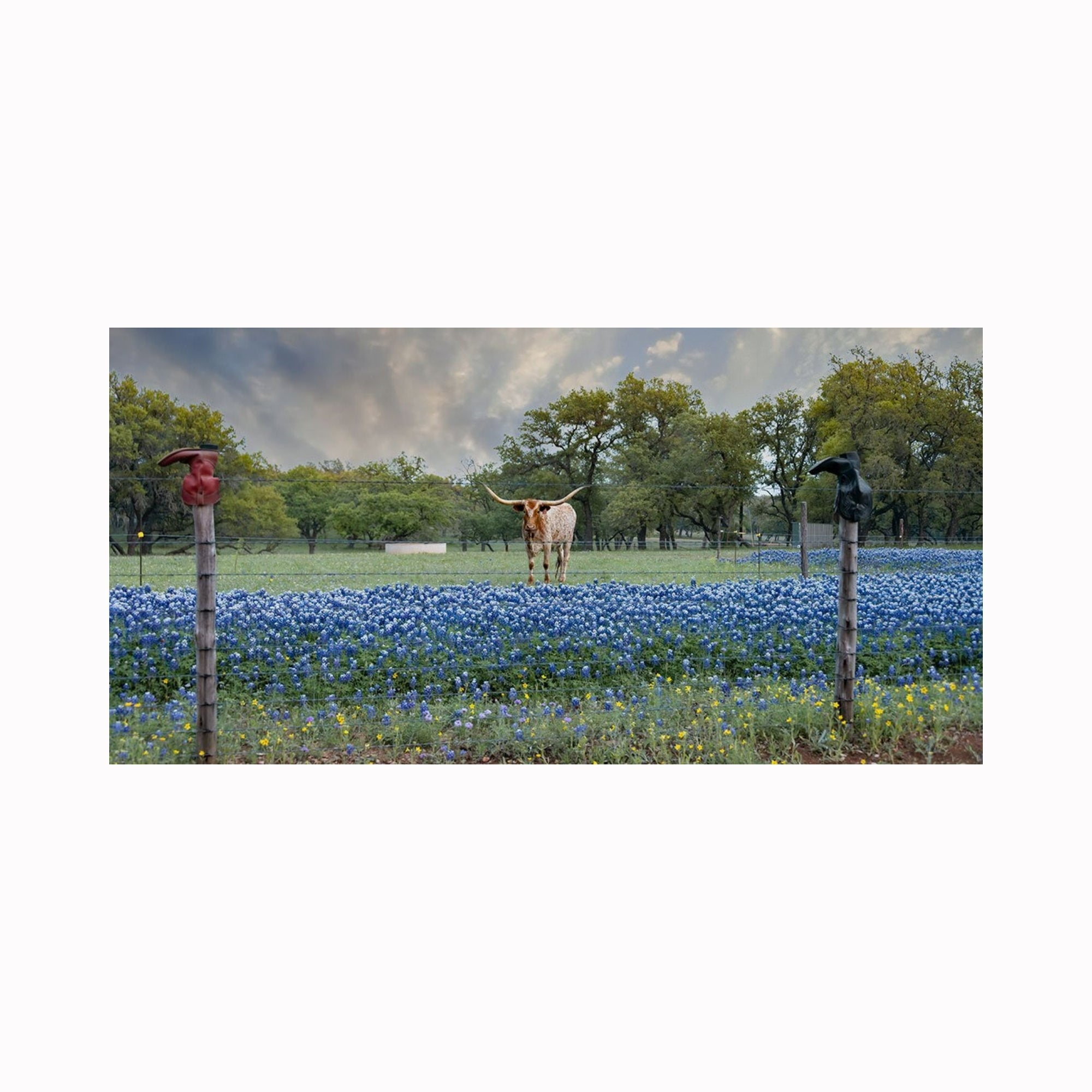 """Oh, Hello There"" by Texas photographer Mark Holly 