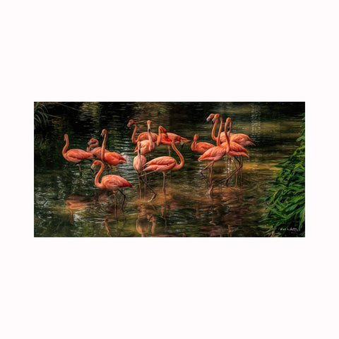 """Flamingo Reflections"" by Texas photographer Mark Holly 