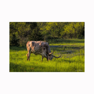 """Happily Grazing"" by Texas photographer Mark Holly 