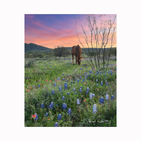 """Horse in Field of Wildflowers"" by Texas digital photographer Mark Holly 