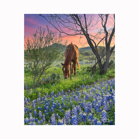 """Bluebonnets & Horse in Field"" by Texas digital photographer Mark Holly 
