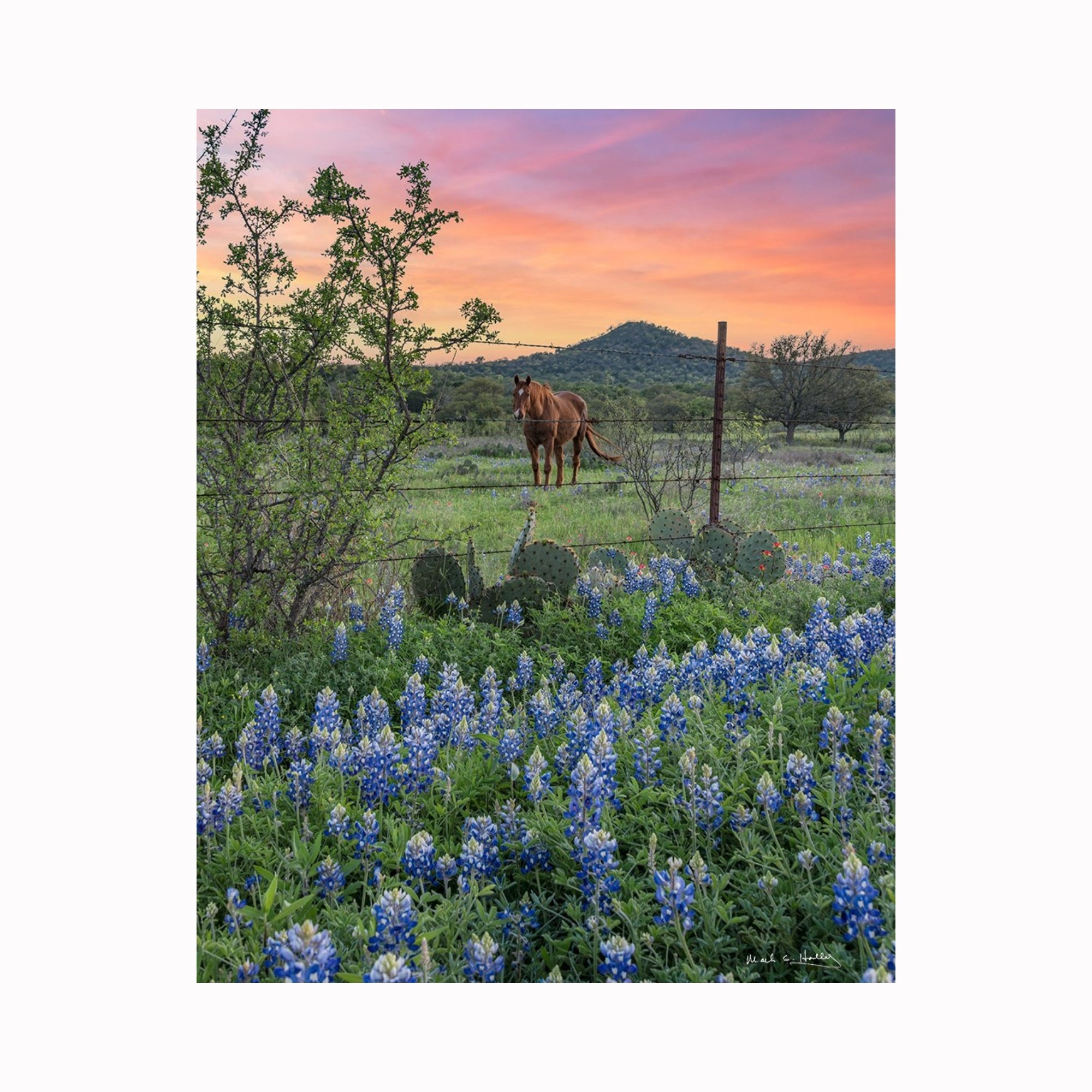 """Bluebonnets & Horses"" by Texas digital photographer Mark Holly 