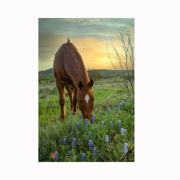 """Bluebonnets for Dinner"" by Texas digital photographer Mark Holly 