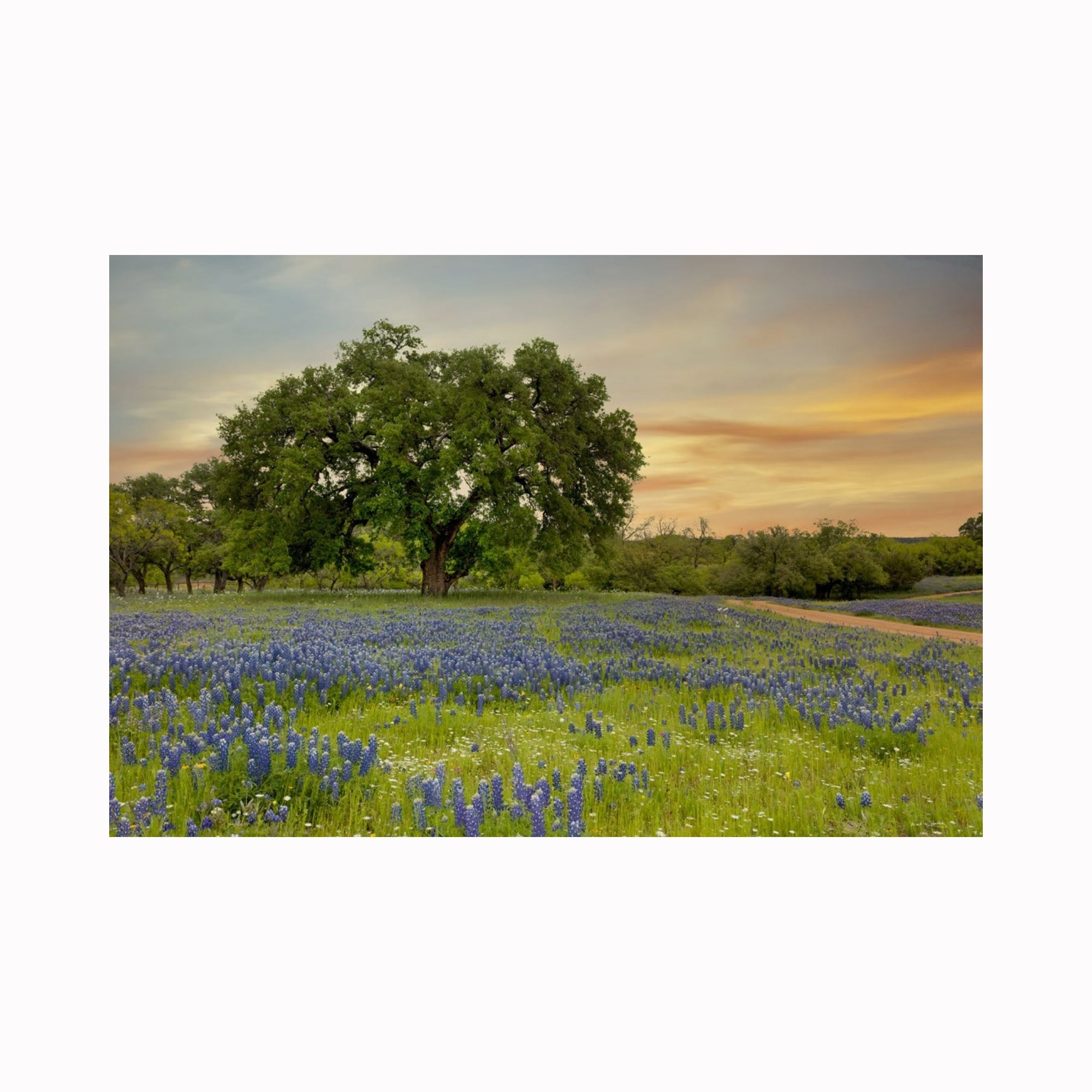 """Bluebonnet & Red Road Sunset"" by Texas photographer Mark Holly 