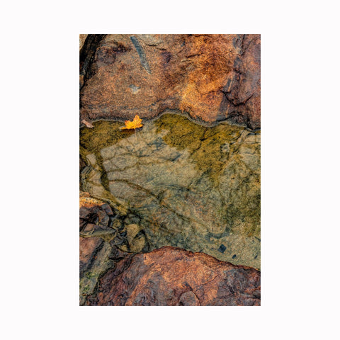 """Lonely Leaf"" by Texas photographer Mark Holly 