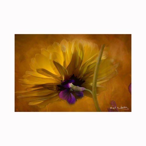 """Contemporary Yellow Mum"" by Texas digital photographer Mark Holly 