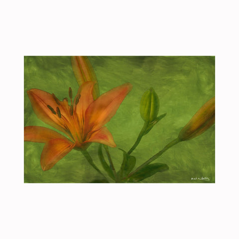 """Contemporary Orange Lily"" by Texas digital photographer Mark Holly 