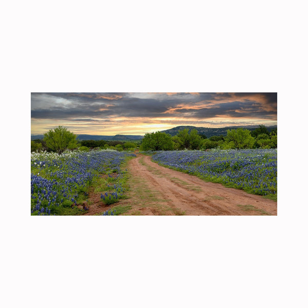 """The Bluebonnet Trail"" by digital photographer Mark Holly 