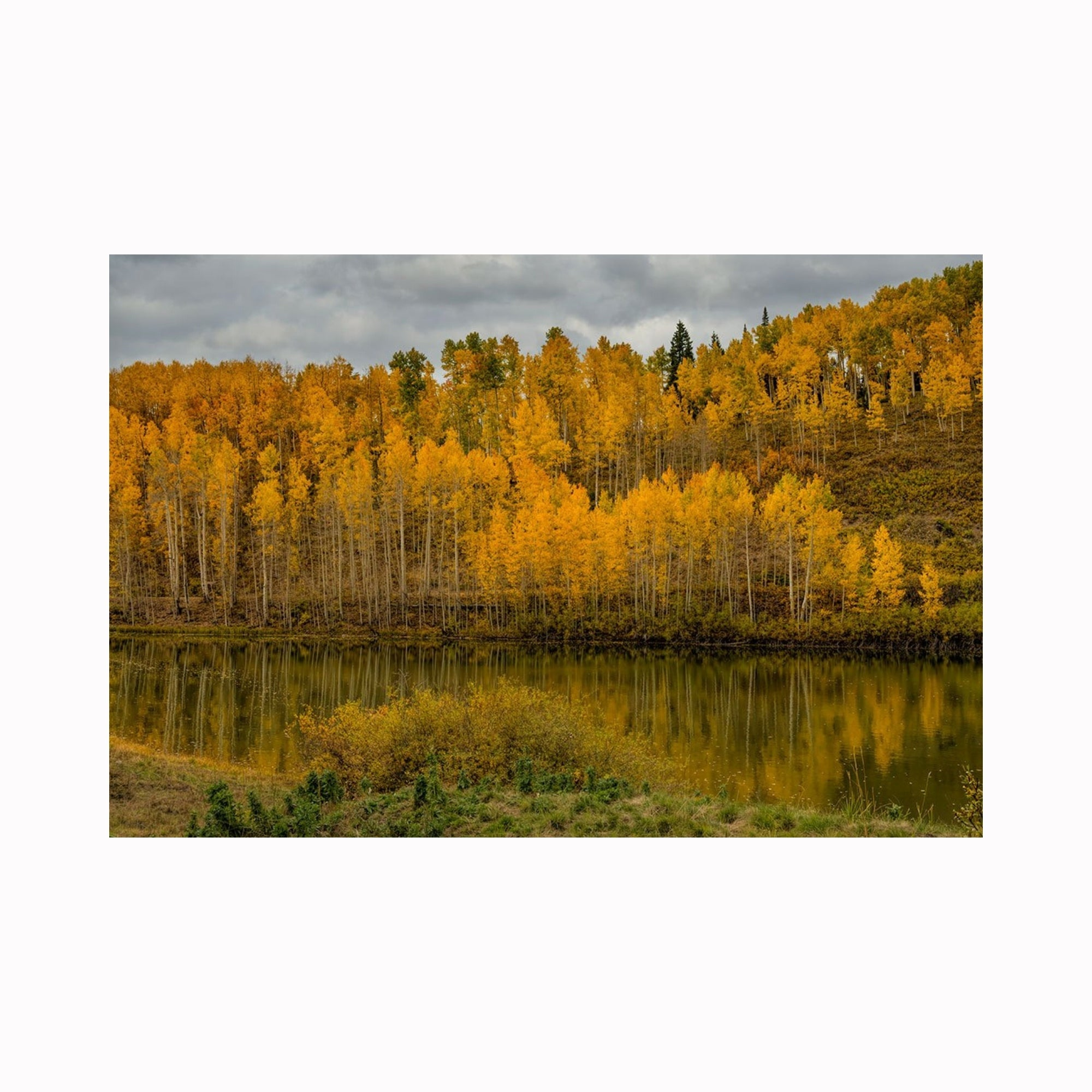 """Colorado Aspen Reflections"" by Texas photographer Mark Holly 