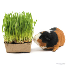 Load image into Gallery viewer, Penny & Pepe® Pet Grass (4 Pack)