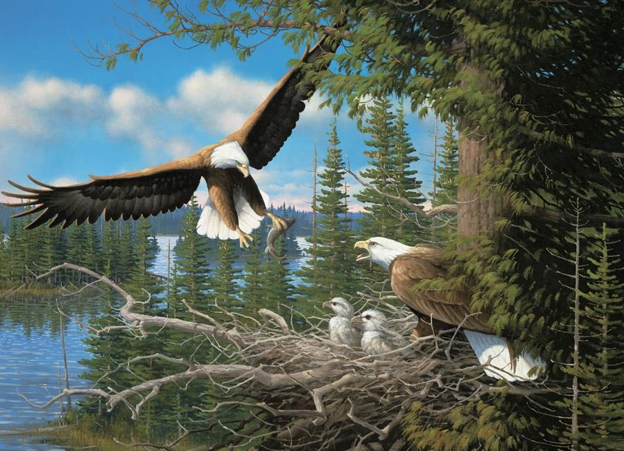 Nesting Eagles @ https://www.jestersfunfactory.net/