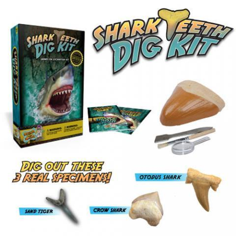 Shark Teeth Digging Science Kit!