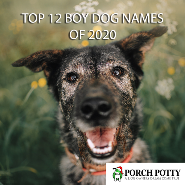 12 Top Boy Dog Names of 2020
