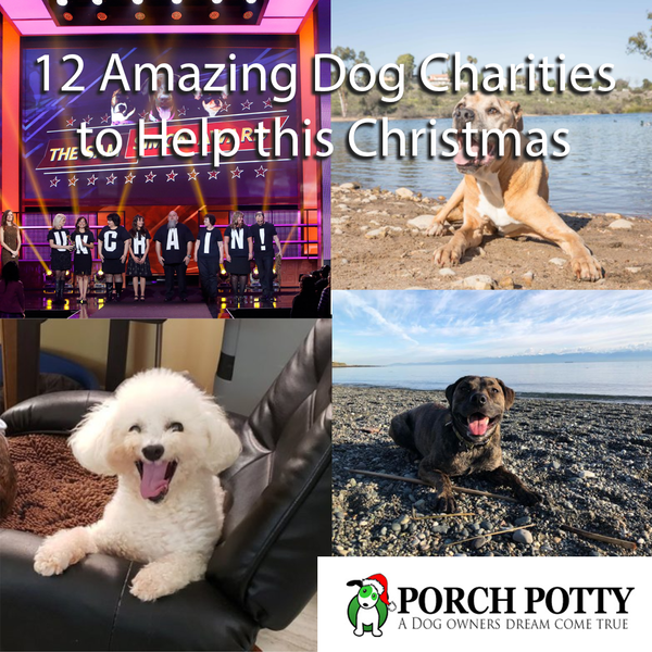 12 Amazing Dog Charities to Help this Christmas