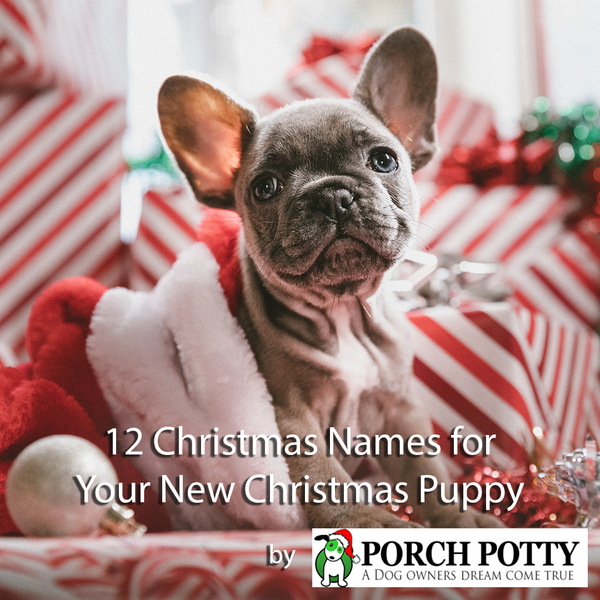 12 Christmas Names for Your New Christmas Puppy