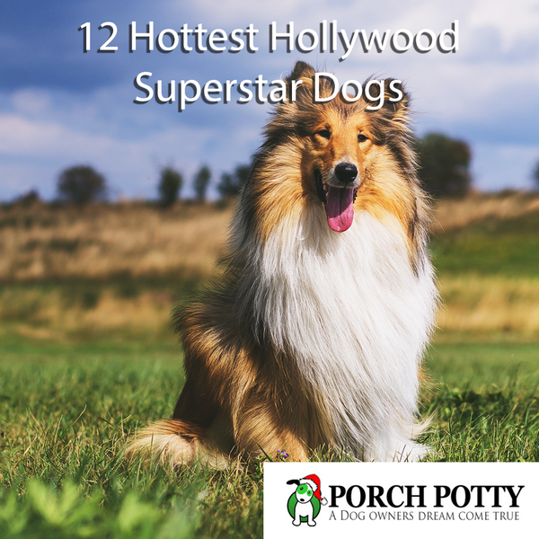 12 Hottest Hollywood Superstar Dogs